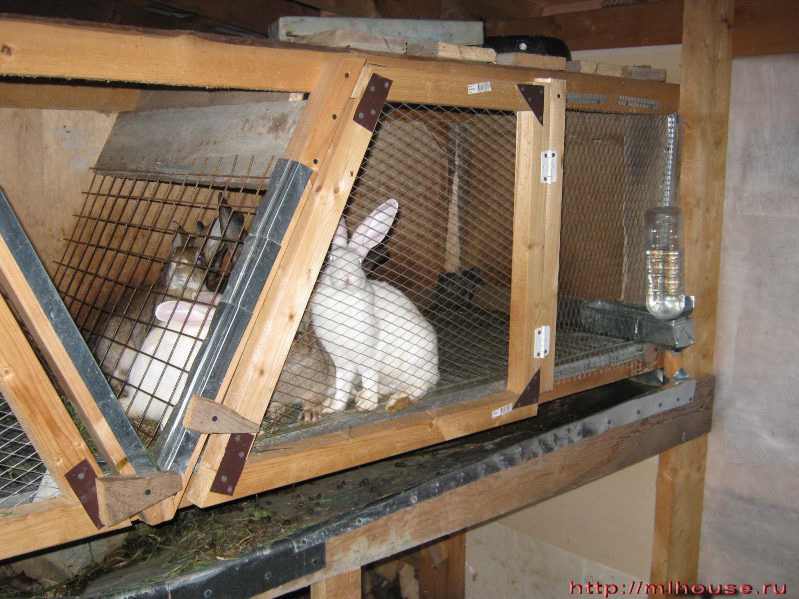 Как сделать автопоилку для кроликов. Кролики 1